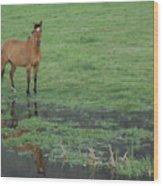 Idaho Farm Horse1 Wood Print