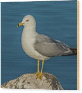 Idaho Sea Gull Wood Print