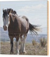 Idaho Work Horse 2 Wood Print