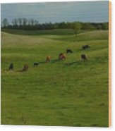 Idyllic Cows In The Hills Wood Print