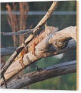 Igauna On A Stick Wood Print