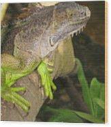 Iguana - A Special Garden Guest Wood Print