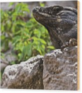 Iguana At Talum Ruins Mexico 2 Wood Print