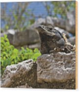 Iguana At Talum Ruins Mexico Wood Print