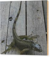 Iguana At The Ready Wood Print