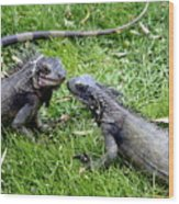 Iguana Kisses St Thomas Wood Print