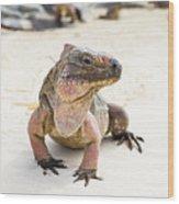 Iguana On The Beach Wood Print