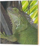 Iguana Puerto Rico Wood Print