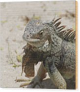 Iguana Sitting On A Sandy Beach In Aruba Wood Print
