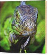 Iguana Stare Wood Print