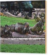 Iguana Trio Wood Print