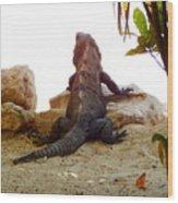 Iguana Watchout Wood Print