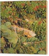 Iguanas Wood Print