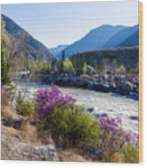 Ilgumensky Rapids At Spring Time. Altay Mountains Wood Print
