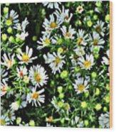 Illinois Wildflowers 1 Wood Print