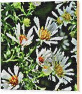Illinois Wildflowers 3 Wood Print