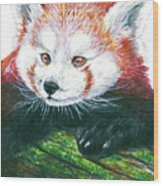 Illlustration Of Red Panda On Branch Drawn With Faber Castell Pi Wood Print