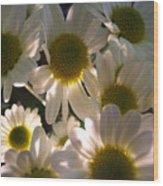 Illuminated Daisies Photograph Wood Print