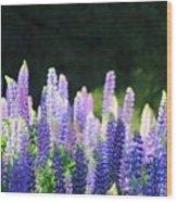 Illuminated Lupines Wood Print