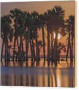 Illuminated Palm Trees Wood Print