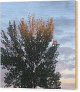 Illuminated Tree Top Wood Print