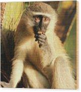 Illuminated Vervet Monkey  Wood Print