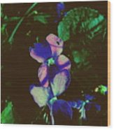 Illuminated Wildflowers Wood Print