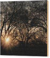 Illuminating Through Trees  Wood Print