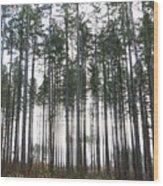 Illumination Wood Print
