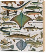 Illustration Of Ocean Fish Wood Print