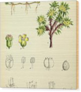 Illustrations Of The Flowering Plants And Ferns Of The Falkland Wood Print