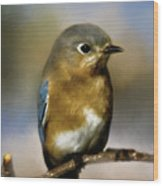 I'm A Bluebird Wood Print