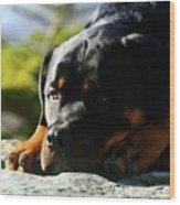 I'm Bored Rottie Wood Print
