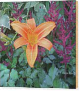 Image Included In Queen The Novel - Late Summer Blooming In Vermont 23of74 Enhanced Wood Print
