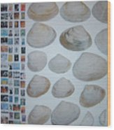 Images And Shells Wood Print