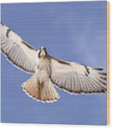 Img-0001 - Red-tailed Hawk Wood Print