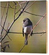 Img_0001 - Dark-eyed Junco - Snowbird Wood Print