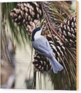 Img_0215-022 - Carolina Chickadee Wood Print
