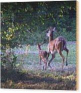 Img_0461-020 - White-tail Deer Wood Print