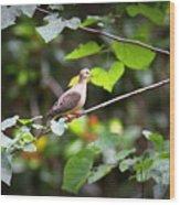 Img_0534-001 - Mourning Dove Wood Print