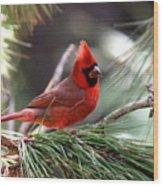 Img_0565-004 - Northern Cardinal Wood Print