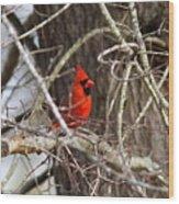 Img_0806 - Northern Cardinal Wood Print