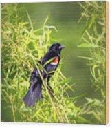 Img_0841-003 - Red-winged Blackbird Wood Print