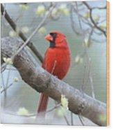 Img_0999-001 - Northern Cardinal Wood Print