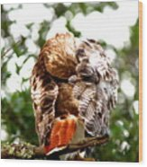 Img_1049-006 - Red-tailed Hawk Wood Print