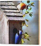 Img_1154 - Eastern Bluebird Wood Print