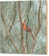Img_1273-003 - Northern Cardinal Wood Print