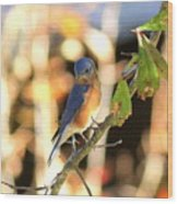 Img_145-005 - Eastern Bluebird Wood Print