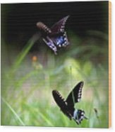 Img_1521 - Butterfly Wood Print