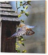 Img_1753-001 - Eastern Bluebird Wood Print